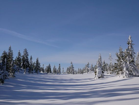 Noorse besneeuwd landschap van Surviking | Maurice van den Boogaard