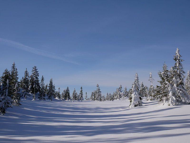 Noorse besneeuwd landschap