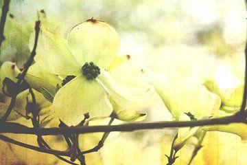Baum Blumen von Markus Wegner