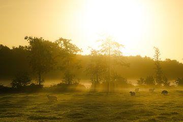 Schafe im Morgennebel von Roelof Nijholt