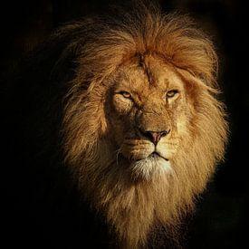 Afrikaanse leeuw van Eye to Eye Xperience By Mris & Fred