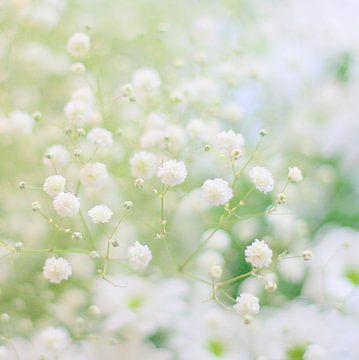 White softness sur Lory van der Neut