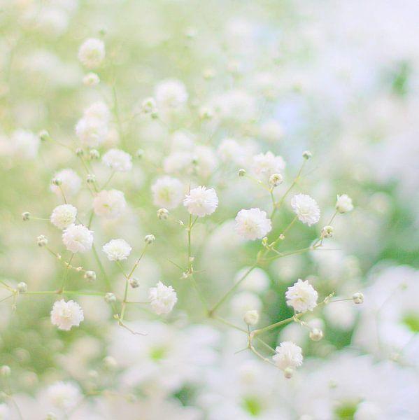 White softness van Lory van der Neut
