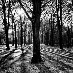Lijnenspel in het bos van