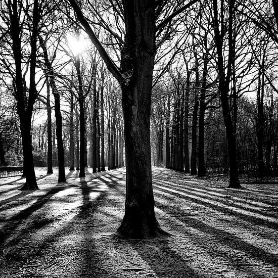 Lijnenspel in het bos