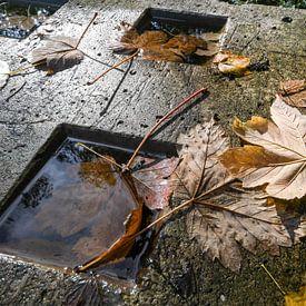 Herbst von Nancy Lamers