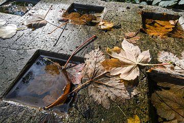 Herfst van Nancy Lamers