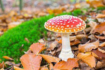 Vliegenzwam paddenstoel met bladeren en mos in bos van Ben Schonewille