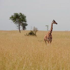 Giraffe in de savanne von Jim van Iterson