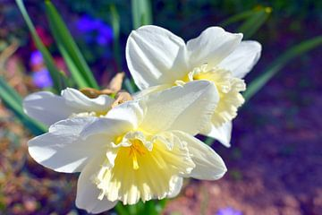 Narcis sur Johann Bucher