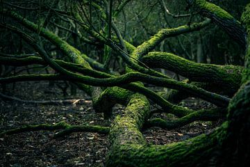 Bemoste bomen van @endstraphoto