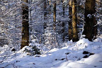 Winter 2021 van Ines Thun