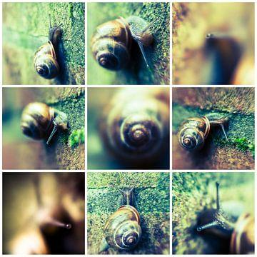 Slakken-collage van Rob van der Pijll