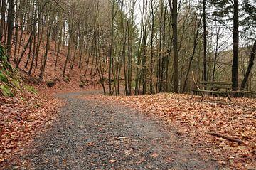 Mit Herbstblättern dekorierter Waldweg von Philipp Klassen