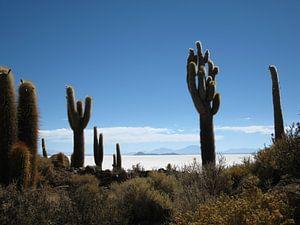 Zoutvlakte van Uyuni - Isla del Pescado