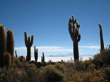Zoutvlakte van Uyuni - Isla del Pescado van Bart Muller