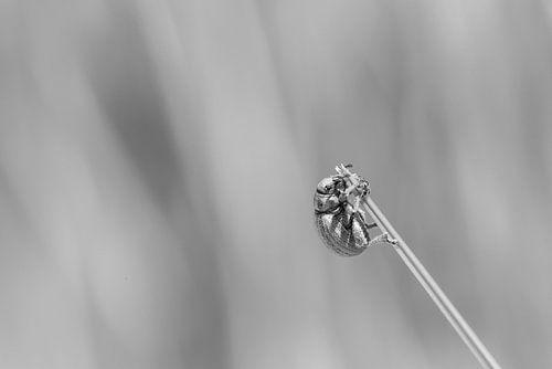 Insect in het helmgras op Terschelling van