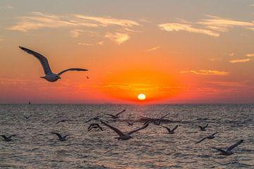 Möwen bei Sonnenuntergang am Strand von Ostende von didier de borle