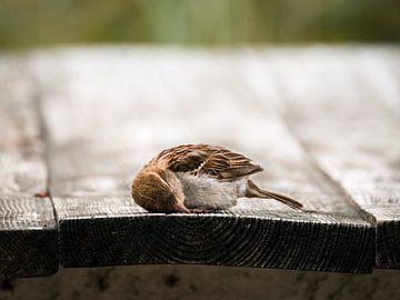 Schläfriger Vogel von Daan Uijterwaal