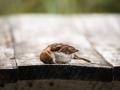 Slaperige vogel