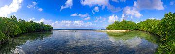 Panorama étonnant d'un petit paradis dans les mangroves d'Aruba