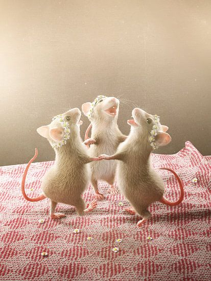 Drei Mäuse tanzen auf dem Tisch