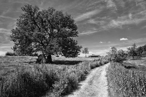 Landschap in zwart wit. van
