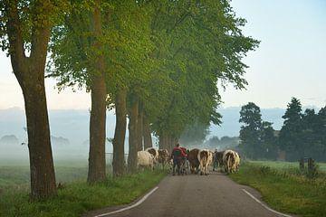 Boer brengt koeien naar het land sur John Leeninga