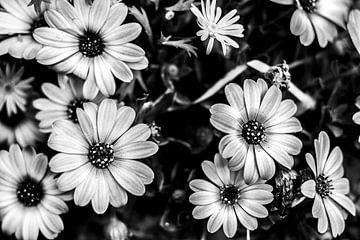Bloemen vintage zwart wit van Dieuwertje en Kevin van der Linden - Meijer