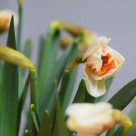 Close-up van een boeket narcissen van Ton Kuijpers