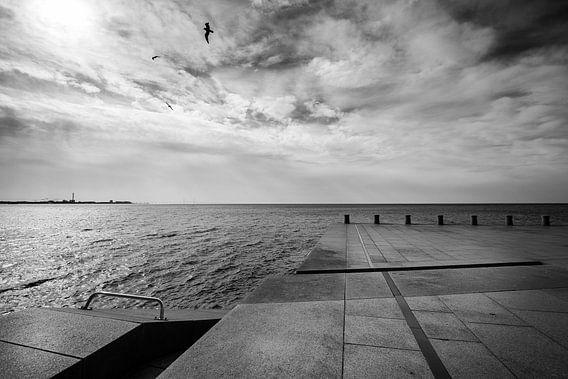 The birds van Maarten De Wispelaere