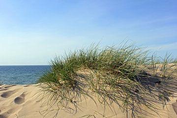 Maidünen von Ostsee Bilder