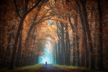 Herbstbild von Anthony Malefijt