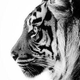 Profiel van een tijgerin van Tazi Brown
