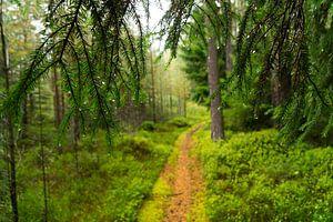 Het pad door de regen