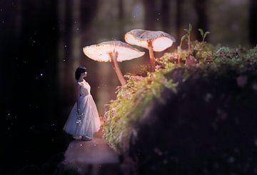 Magisch sprookjesbos van Dennis Carette