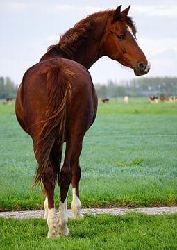 Paard van Ineke Klaassen