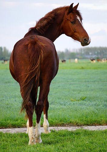 Pferd von Ineke Klaassen