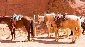 Cowboy horses van