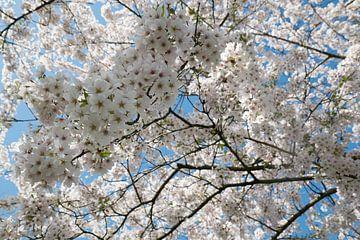 Blütenpark Amsterdam Wald von Marieke van de Velde