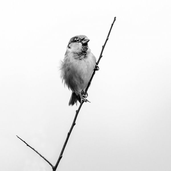 Blowing in the wind van Ruud Peters