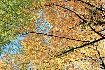 kleuren in de lucht van Roger Hagelstein