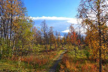 Zonsopgangssfeer in het Zweedse Lapland in de herfst van Thomas Zacharias