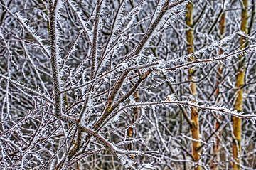 Frost und Zweige von