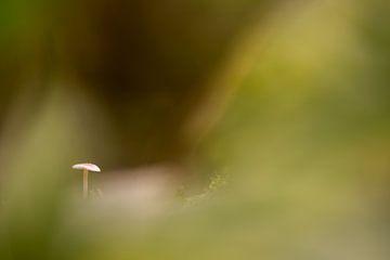 Ein kleiner Pilz im Wald von Marcel Derweduwen