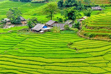 Sa Pa, Vietnam van Richard van der Woude