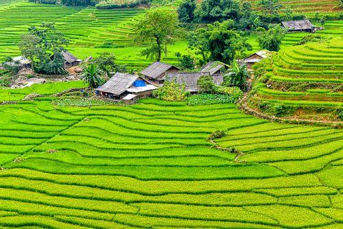 Sa Pa, Vietnam von Richard van der Woude