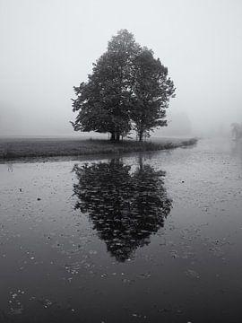 Boom in de mist met reflectie van