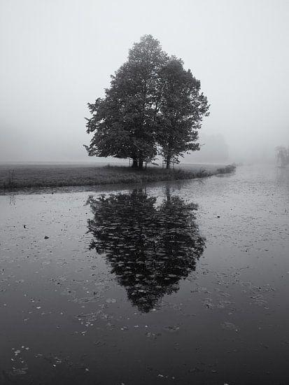 Boom in de mist met reflectie van Paul Beentjes