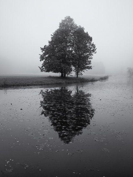 Boom in de mist met reflectie